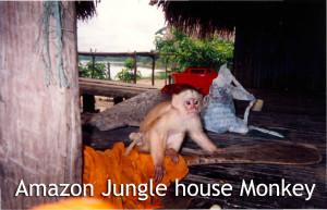 Amazon Jungle House Monkey - Linda Deir took picture.